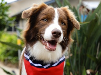 Jasper Therapy Dog sitting on at Suncoast Christian College